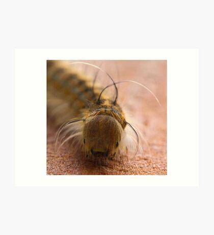 Macro Caterpillar Art Print