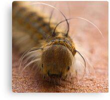 Macro Caterpillar Canvas Print