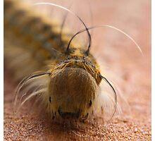 Macro Caterpillar Photographic Print
