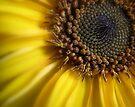 Sunny RAYS by Maria  Moro