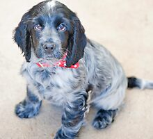 Tuppence (12 weeks) by nadine henley