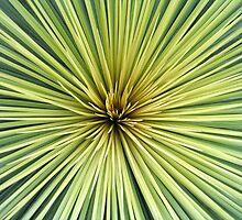 Grass Tree by greenspirit