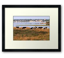 The Beauteous Cows of Overton Framed Print