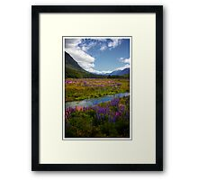 Milford Lupin Framed Print