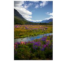 Milford Lupin Photographic Print