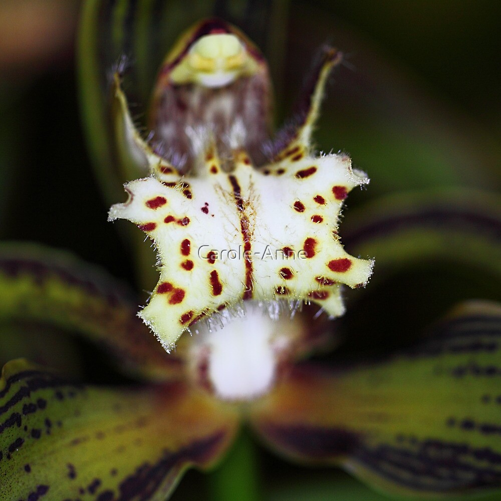 Orchid in Macro by Carole-Anne