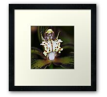 Orchid in Macro Framed Print