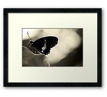 Nectar connoisseur Framed Print