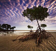 Yule Point Mangroves - Port Douglas FNQ by Mark Shean