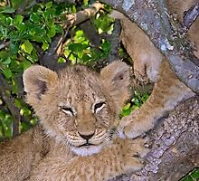 Lion Cub by Henry Jager