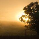 Golden Fog. by GailD