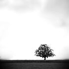 Lonely Tree by Paul  Reece