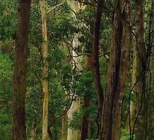 Yarra Forest. by Bette Devine