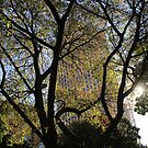 Dappled light, a sunny winter's day by Adriano Carrideo