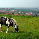 Grazing Horse, Whitby Abbey by Tania  Donald