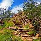 Meyer's Hill Track, Alice Springs by TonyCrehan
