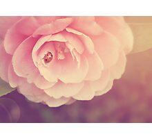 Ladybird on Camelia flower Photographic Print