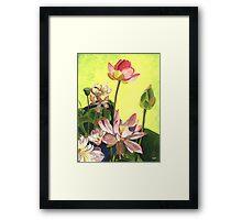 Citron Lotus 1 Framed Print