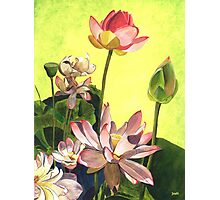 Citron Lotus 1 Photographic Print