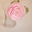 Single pink Camelia by Lyn  Randle