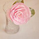 Single pink Camelia by Lyn  Randle