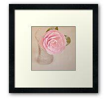 Single pink Camelia Framed Print