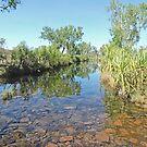 King Edward River, Kimberley, Western Australia by Margaret  Hyde