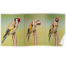 Goldfinch ~Triptych Poster