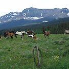BLACKFOOT HORSE BAND - NEAR BROWNING, MT by May Lattanzio