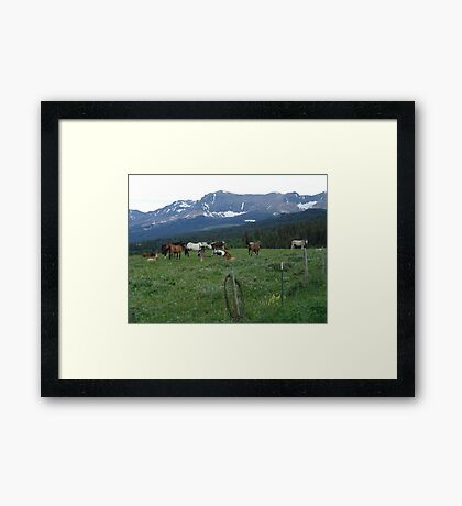 BLACKFOOT HORSE BAND - NEAR BROWNING, MT Framed Print