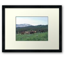 THE BLACKFOOT BAND AND THE SORREL STUD - Near Browning, MT Framed Print