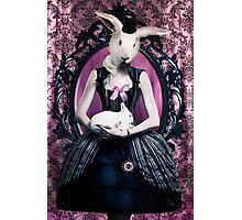 Lady Rabbit Photographic Print