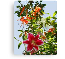 Beautiful Lily's Canvas Print