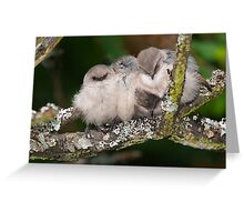 Snuggling Bushtits Greeting Card