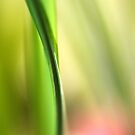 Abstract by AnnieSnel