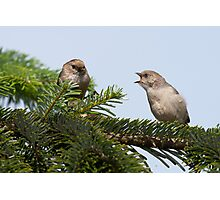 Begging Bushtit Photographic Print