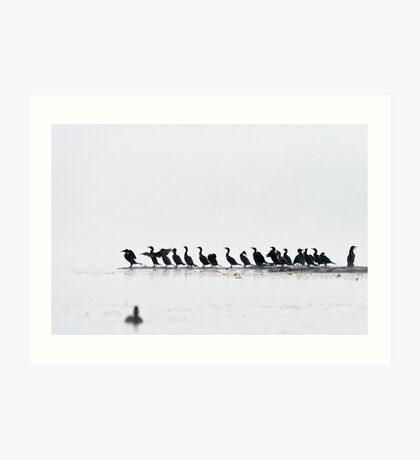 Logging in the Fog - Double-crested Cormorants Art Print