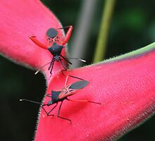 The Assassin Bug Dance by Laurel Talabere