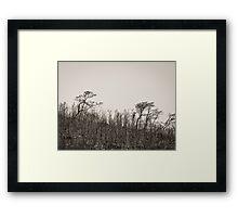 Burnt earth Framed Print