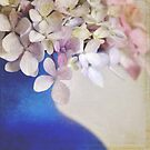 Pink and blue Hydrangeas by Lyn  Randle