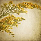 Sepia gold by Lyn  Randle