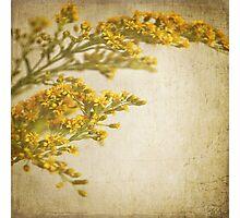Sepia gold Photographic Print