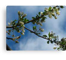 April blossoms Canvas Print