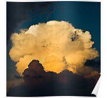 Anvil birds Poster
