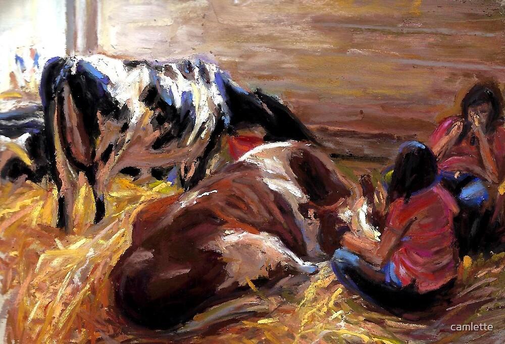 Calming Cows by Cameron Hampton