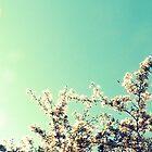 Spring Blossom by HWilso