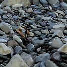 Rockpile - seamless tile by Darcy Overland