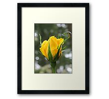 """""""Radiant Perfume"""" Rosebud Framed Print"""