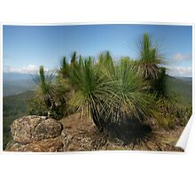 Grasstrees on the summit of Mt Mitchell. Scenic Rim. Qld. Poster