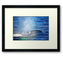 Humpback Whale taking a Breath Framed Print